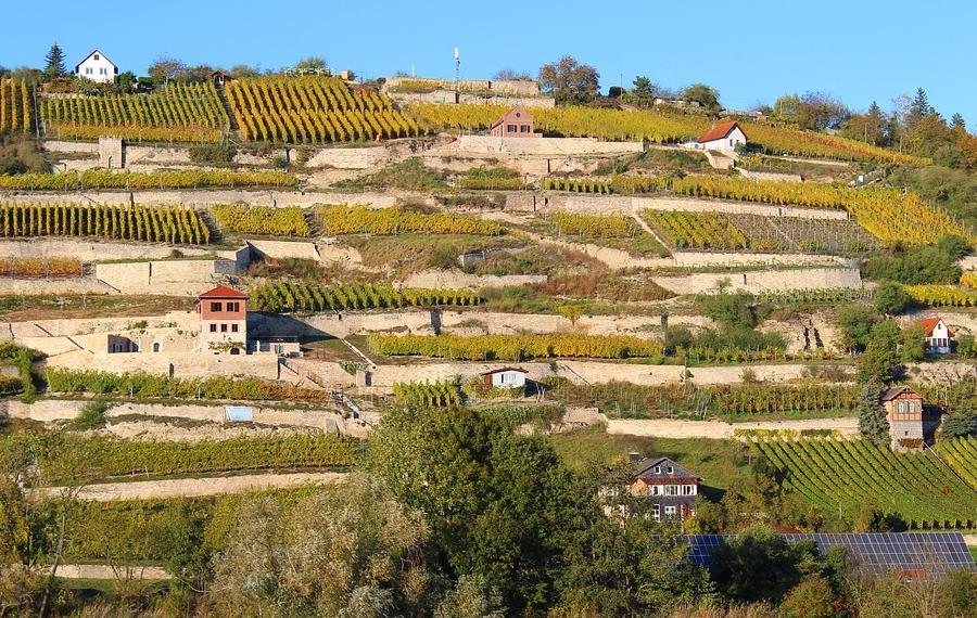 Mehr Informationen zu: Tag des offenen Weinkellers